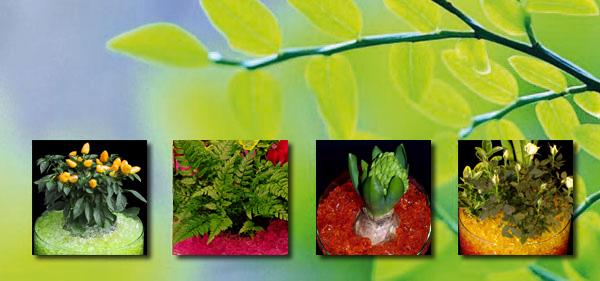 plantes gel r tenteur d 39 eau floragel une v ritable r serve d 39 eau pour vos plantes. Black Bedroom Furniture Sets. Home Design Ideas